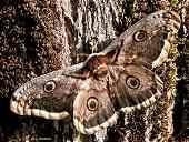 82 - Papillons, chenilles